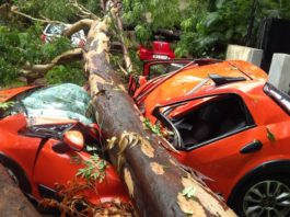 Tree Falls Down On Five Cars, At Thane